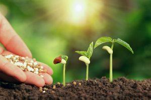 Benefits Of Choosing Organic Fertilizers