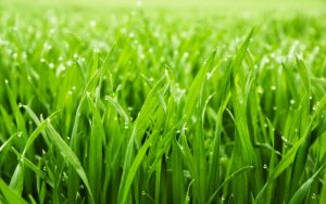 Improved Quality Of Grass | Benefits Of Choosing Organic Fertilizers | Organic AG Products