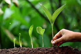 Better Cation Exchange Capacity | Benefits Of Choosing Organic Fertilizers | Organic AG Products