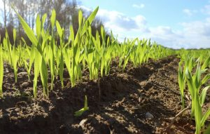 Root Growth | Benefits Of Choosing Organic Fertilizers | Organic AG Products