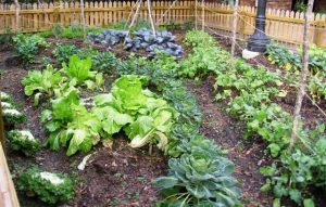 How to Incorporate Fish Fertilizer Into Your Home Gardening Project