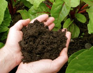 Soil Improvement | The Benefits Of Fish Fertilizer