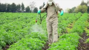 pesticide spray equipment is clean and working properly